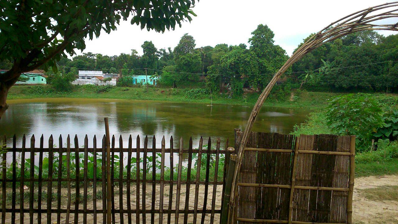 Tanvi's garden